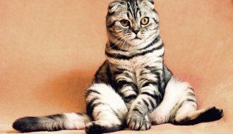 pet cat picture